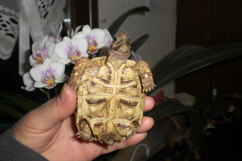 Identification tortue-léopard 011_311