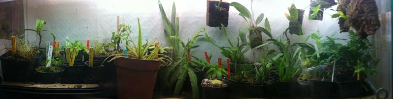 photos de mes orchidées en fleur Terrar10