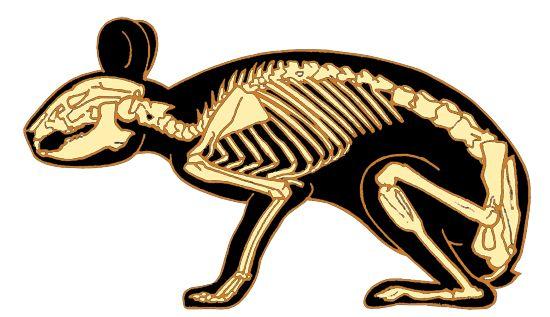 Animali strani Captur10