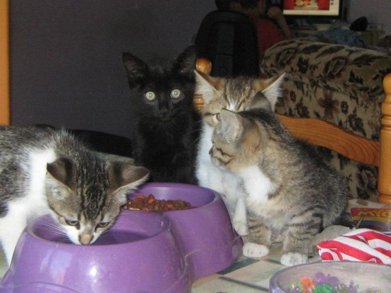 5 chatons trouvés 55341810