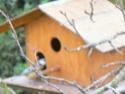 les oiseaux de nos contrées P1030015
