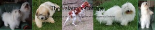 The Valaury's Cottage Bannie10