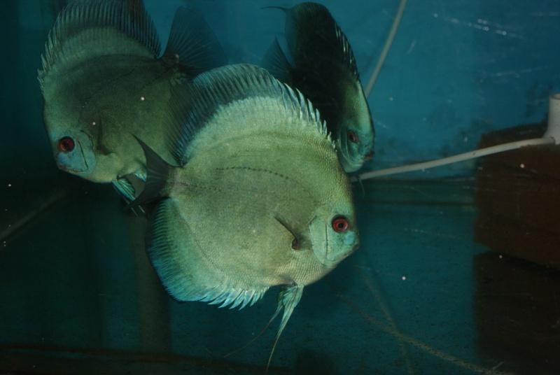 Voyage au Pérou (croisière aquario solidaire 2012)  Dsc06218