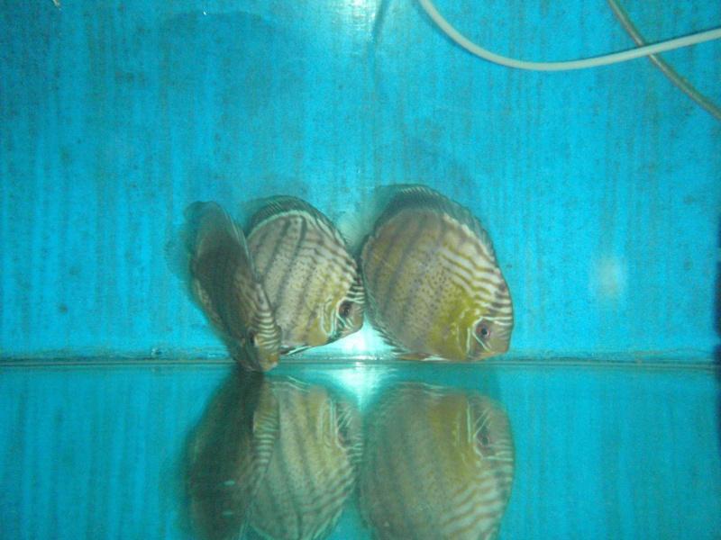 Voyage au Pérou (croisière aquario solidaire 2012)  Pa020010