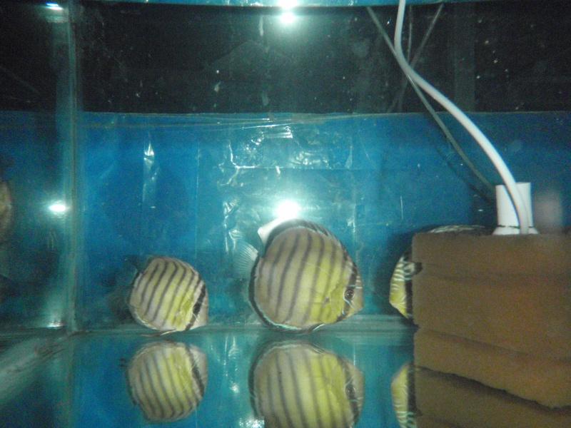 Voyage au Pérou (croisière aquario solidaire 2012)  Pa020011