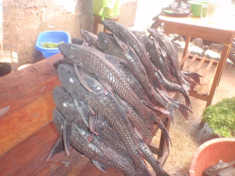 Voyage au Pérou (croisière aquario solidaire 2012)  Pa030015