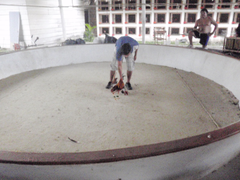 Voyage au Pérou (croisière aquario solidaire 2012)  Pa030111