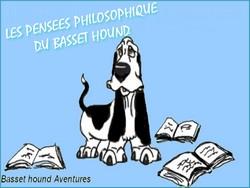 créer un forum : basset hound aventures - Portail Portai49