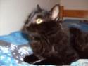 je vous présente mon chat Billy Billy_12