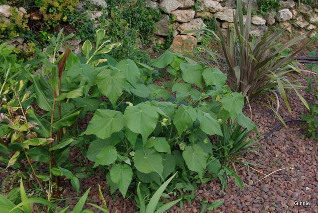 Quelques photos de mon jardin : gros projet 2013 : Evolution Mai 2014 - Page 5 Imgp6019