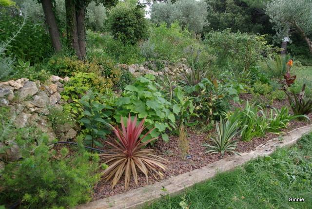 Quelques photos de mon jardin : gros projet 2013 : Evolution Mai 2014 - Page 5 Imgp6020