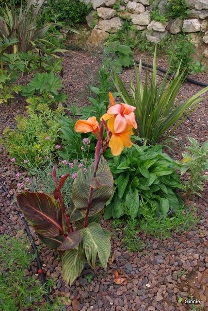 Quelques photos de mon jardin : gros projet 2013 : Evolution Mai 2014 - Page 5 Imgp6111