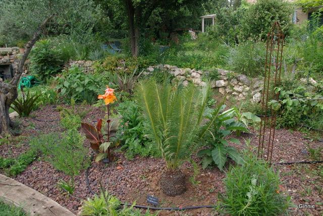 Quelques photos de mon jardin : gros projet 2013 : Evolution Mai 2014 - Page 5 Imgp6114