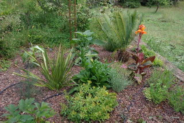 Quelques photos de mon jardin : gros projet 2013 : Evolution Mai 2014 - Page 5 Imgp6115