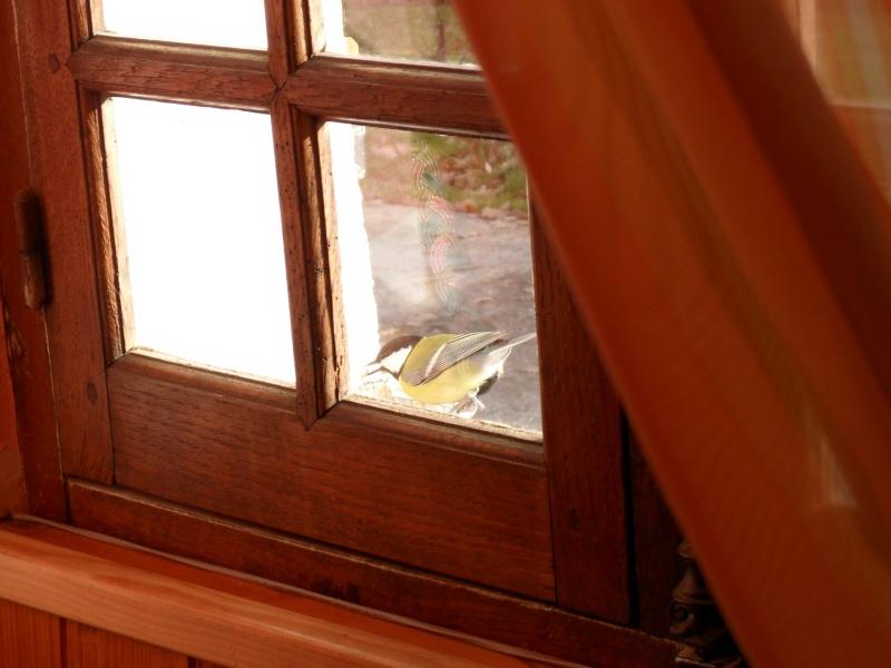 maud  et ses oiseaux 00310