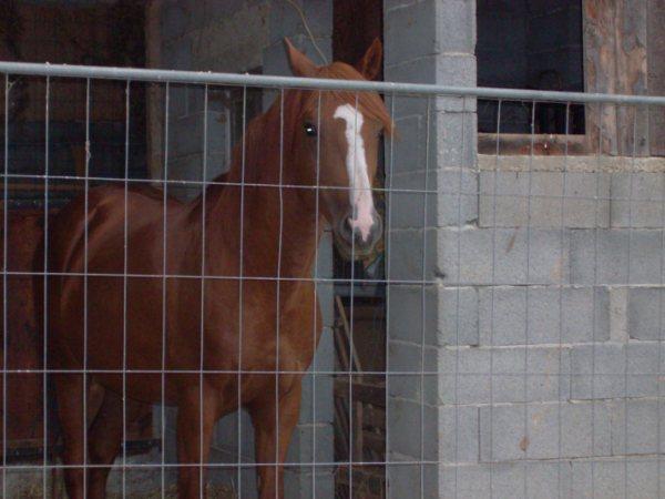 JE VOUS PRESENTE  JOY et ses bébés (11/2009) Getatt16