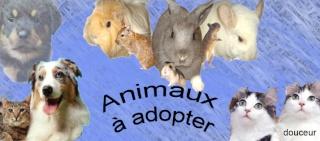 forum  detresse animal - Portail Animau10