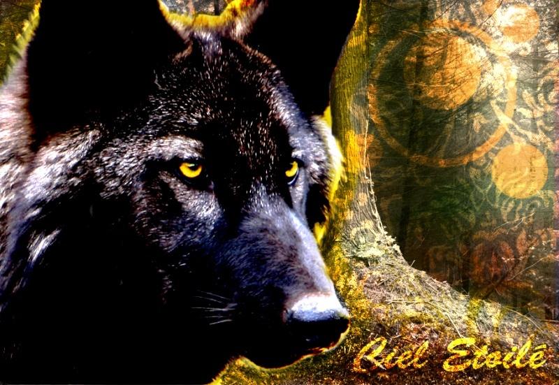 Wolf temporal Hhgjgh10