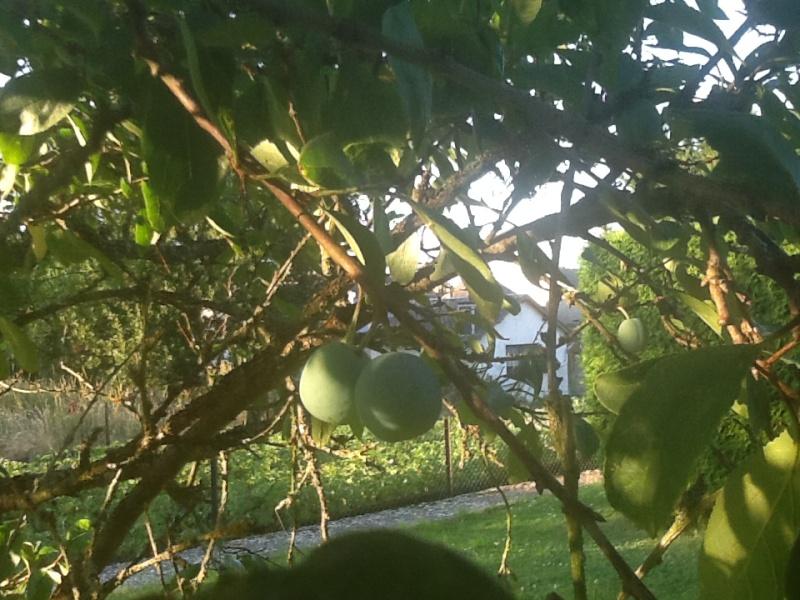 Photos de nos jardins Mirabe10