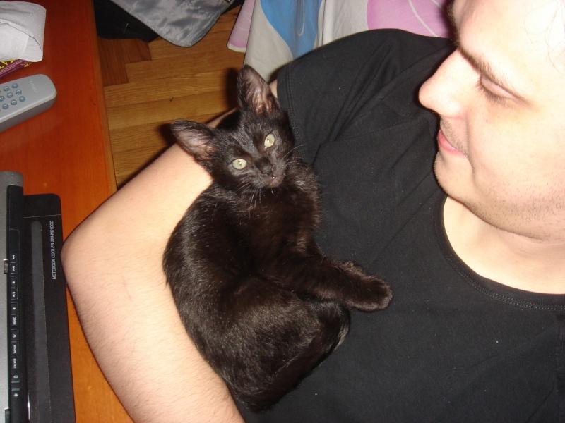 Νέο γατάκι - Σελίδα 4 Dsc00410