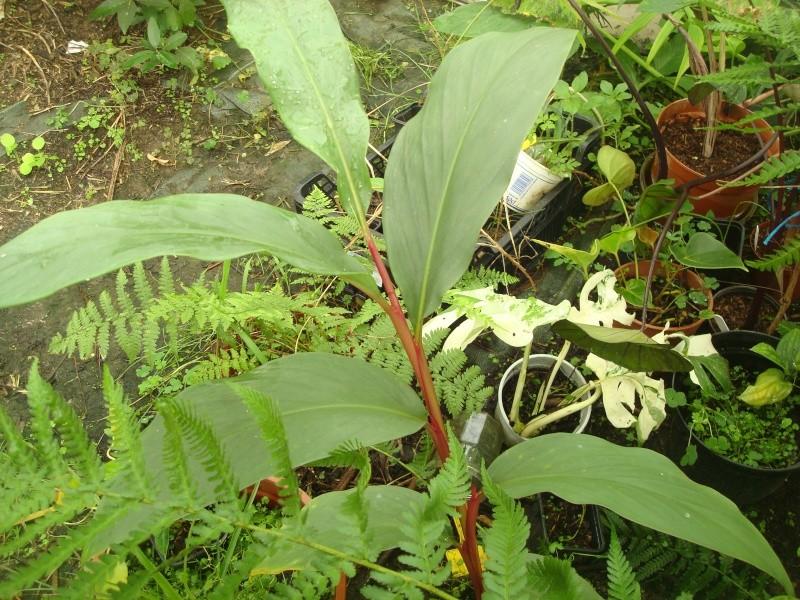Une petite plante qui a perdu son étiquette et son nom...... Photo_10