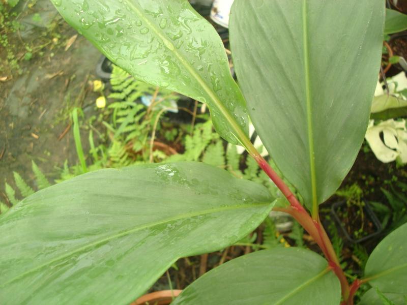 Une petite plante qui a perdu son étiquette et son nom...... Photo_11