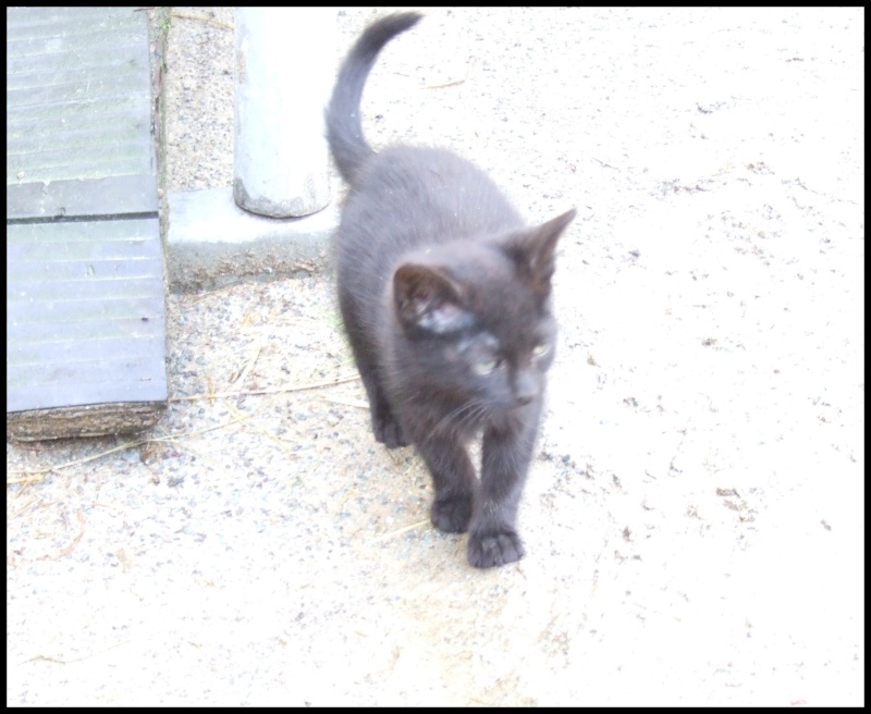 (50) 3 chatons noirs Aubade10