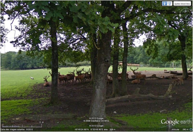 Le parc animilier de Sainte Croix à Rhodes (Moselle, France) Cerfs10