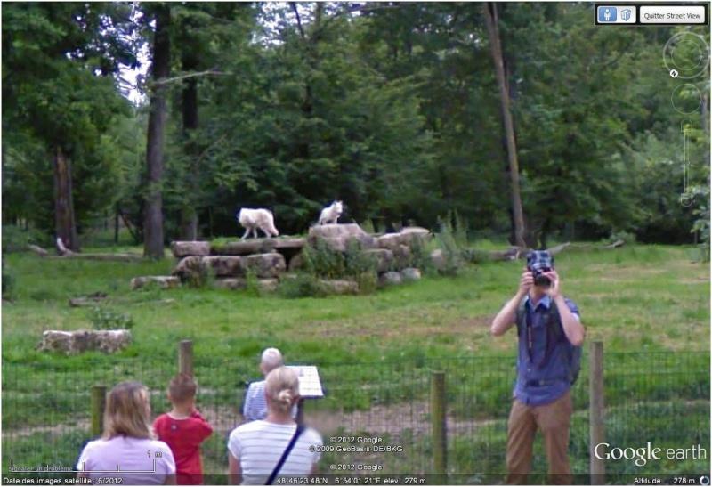 Le parc animilier de Sainte Croix à Rhodes (Moselle, France) Loups10
