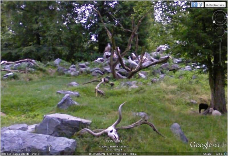 Le parc animilier de Sainte Croix à Rhodes (Moselle, France) Vautou10