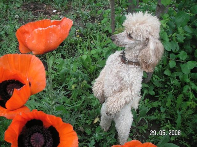 7. Растения и животные Pict0016