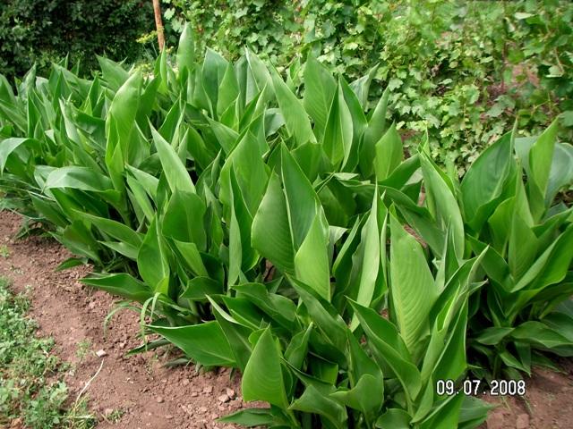 Выращивание листовых черенков в торфяных таблетках. - Страница 4 Pict0210