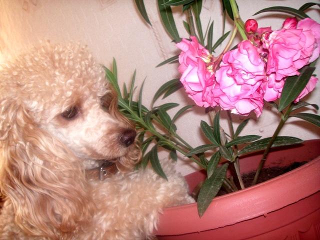 7. Растения и животные Pict0211