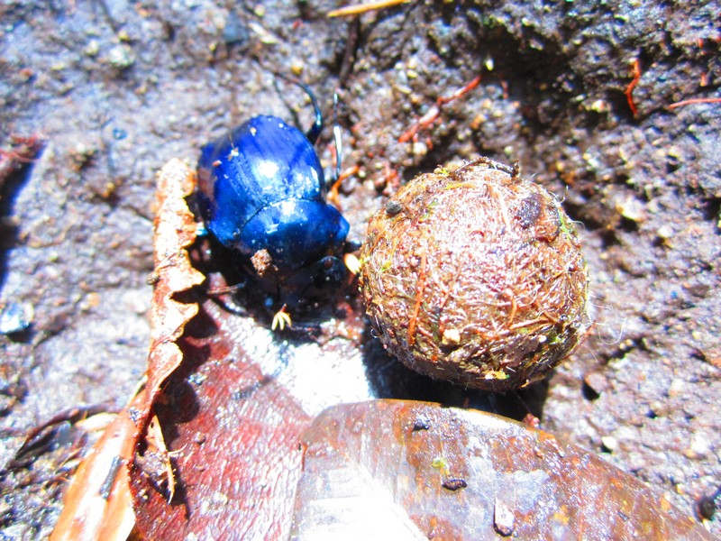 Costa Rica I : Bestioles d'ici et... surtout d'ailleurs Img_0810