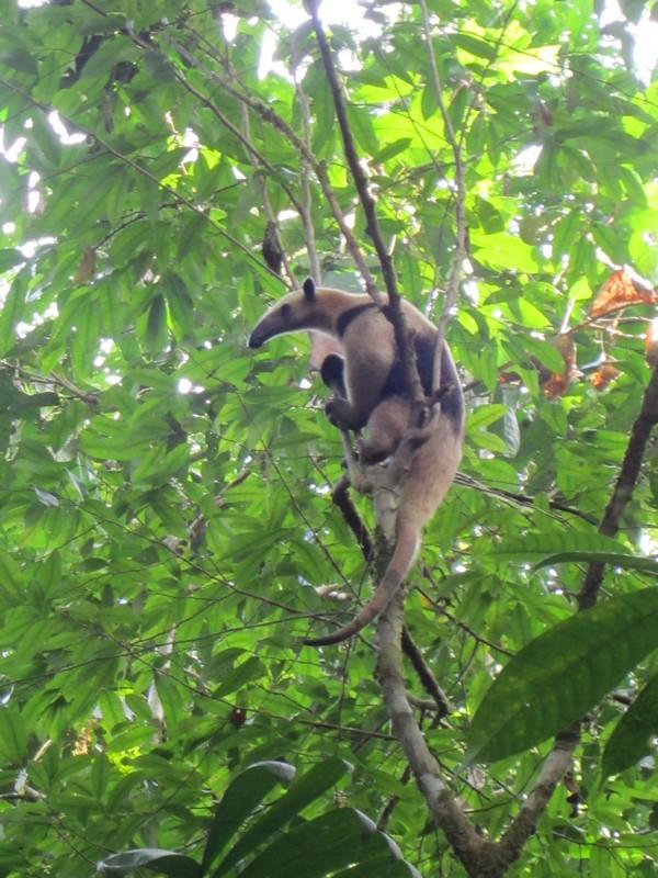 Costa Rica I : Bestioles d'ici et... surtout d'ailleurs Img_0811
