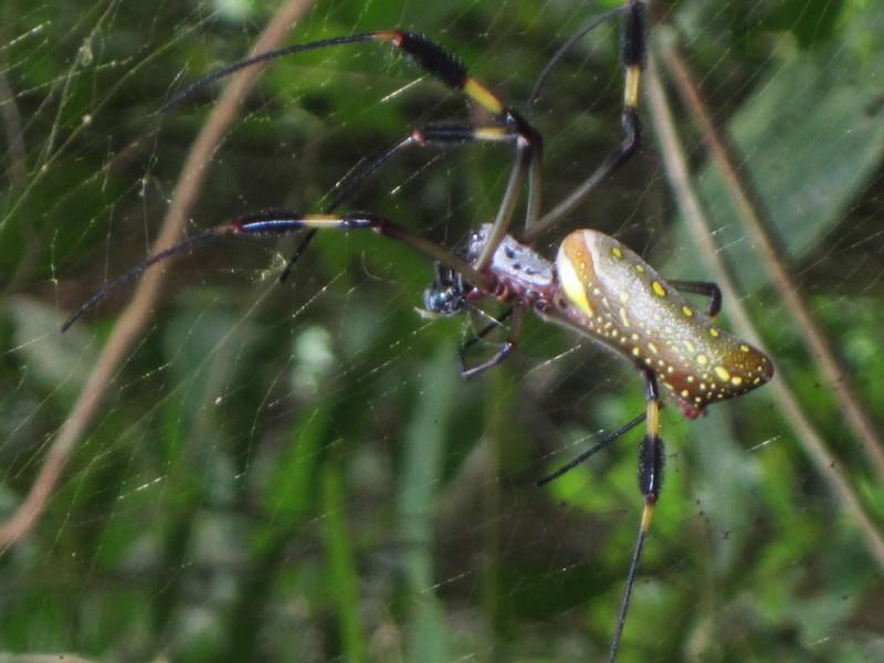 Costa Rica I : Bestioles d'ici et... surtout d'ailleurs Img_0812