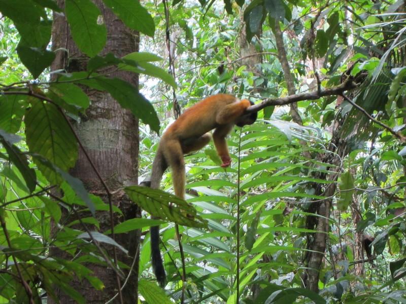 Costa Rica I : Bestioles d'ici et... surtout d'ailleurs Img_0813