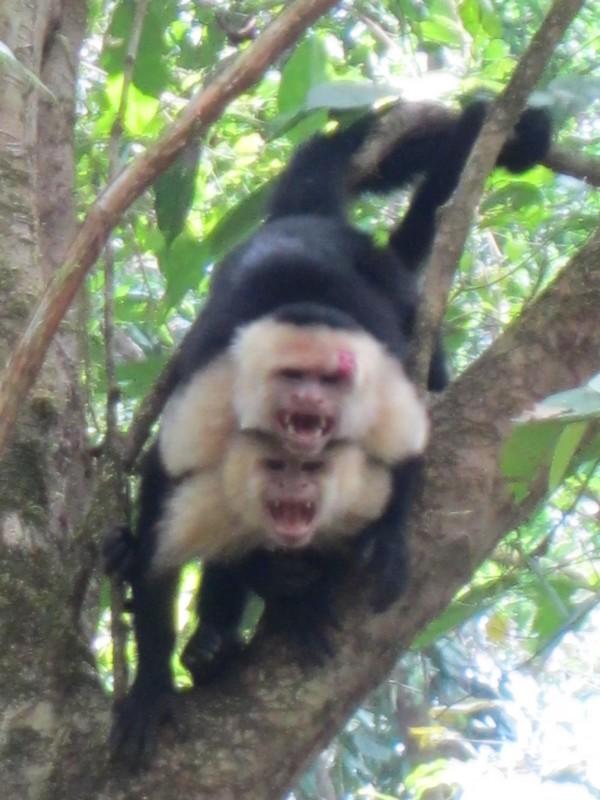 Costa Rica I : Bestioles d'ici et... surtout d'ailleurs Img_0814