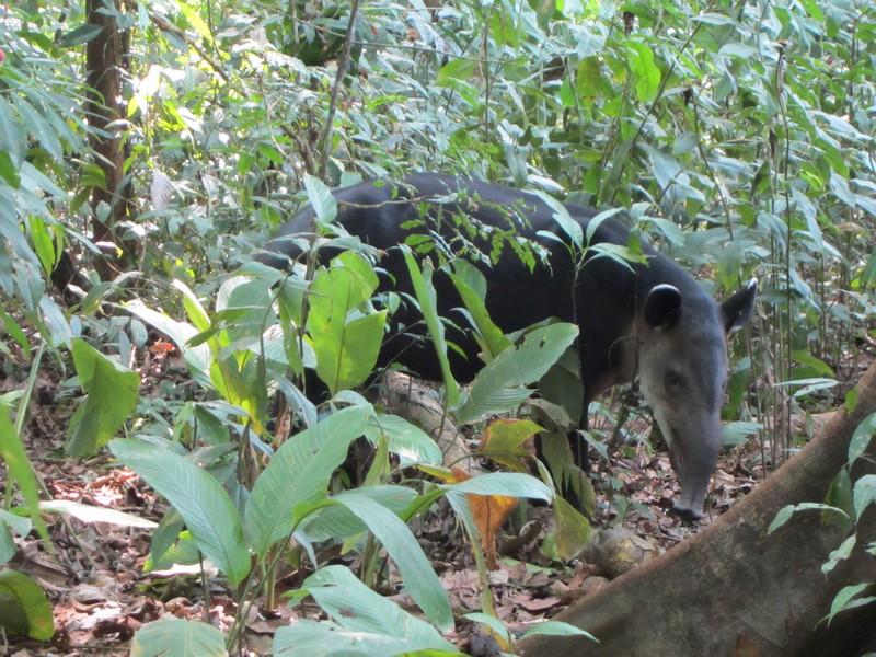 Costa Rica I : Bestioles d'ici et... surtout d'ailleurs Img_0815