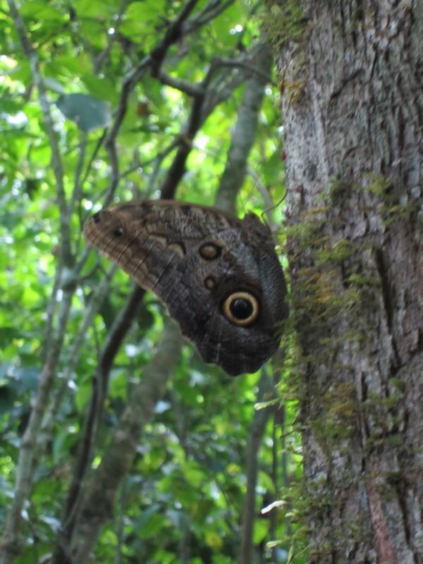 Costa Rica I : Bestioles d'ici et... surtout d'ailleurs Img_0816