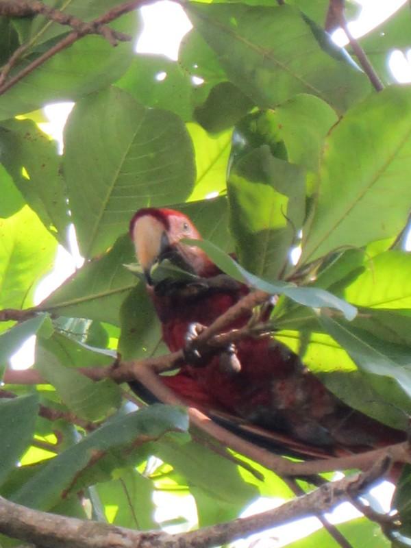 Costa Rica I : Bestioles d'ici et... surtout d'ailleurs Img_0910