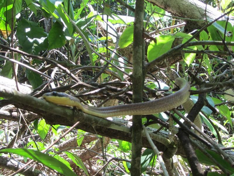 Costa Rica I : Bestioles d'ici et... surtout d'ailleurs Img_0911
