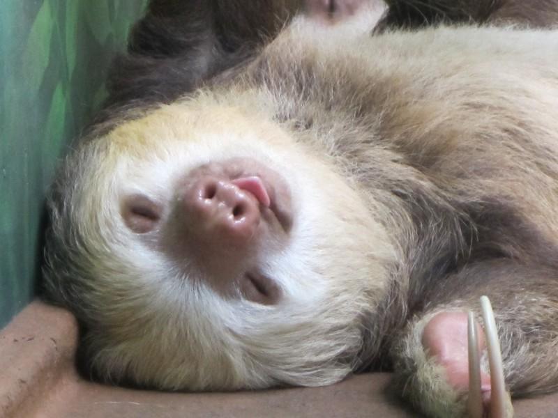 Costa Rica I : Bestioles d'ici et... surtout d'ailleurs Img_0913