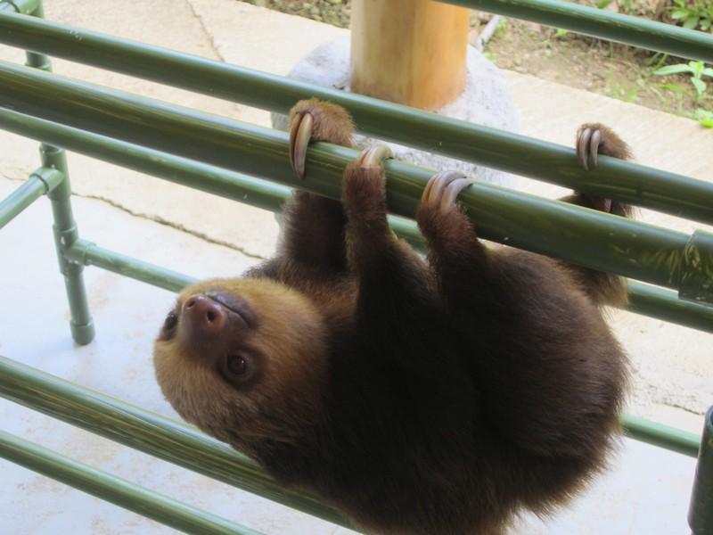 Costa Rica I : Bestioles d'ici et... surtout d'ailleurs Img_0914