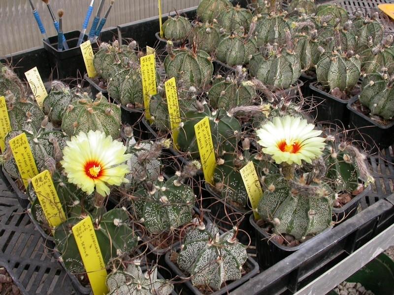 Les dernières floraisons Dscn5347