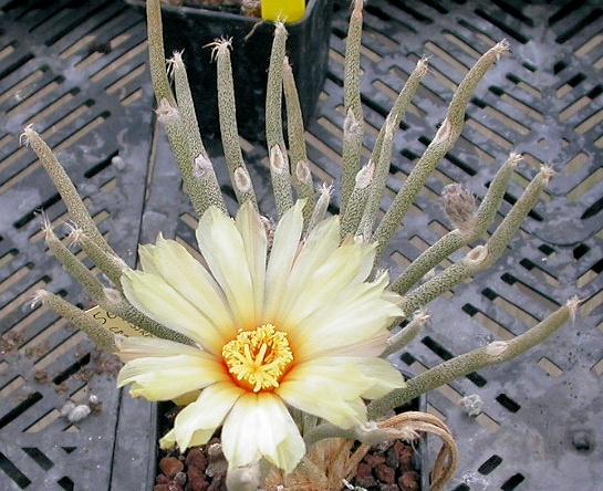 Les dernières floraisons Dscn5411