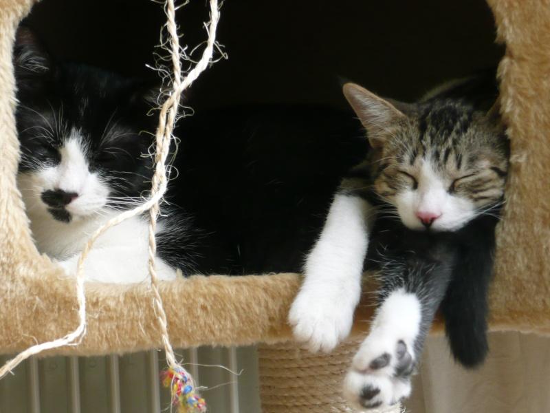 3 chatons, 2 filles, 1 mâle, 3, 5 mois - Page 5 P1020210