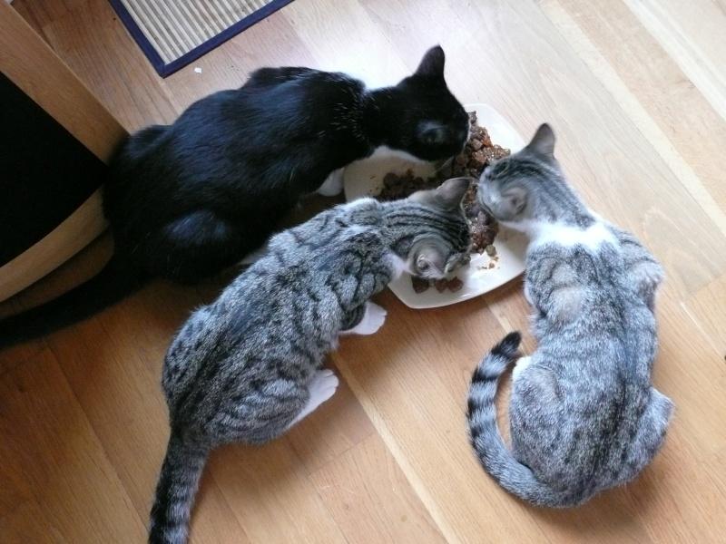 3 chatons, 2 filles, 1 mâle, 3, 5 mois - Page 5 P1020316