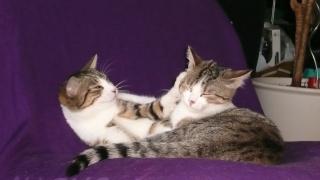3 chatons, 2 filles, 1 mâle, 3, 5 mois - Page 6 P1020619