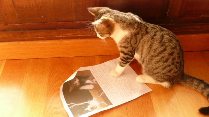 3 chatons, 2 filles, 1 mâle, 3, 5 mois - Page 6 P1020711
